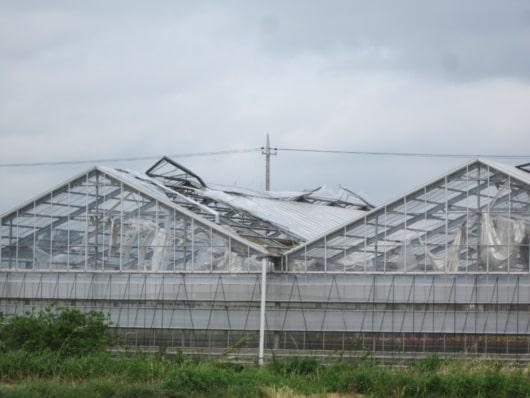台風の風により破損した鉄骨ビニールハウス